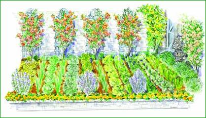 Декоративный огород свежая зелень