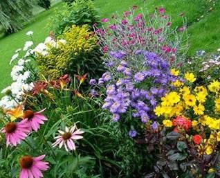 Цветочное оформление палисадника